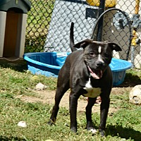 Adopt A Pet :: Louie - Yonkers, NY