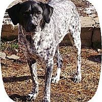Adopt A Pet :: Delanie - Streetsboro, OH