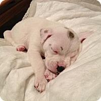 Adopt A Pet :: Dot - Marlton, NJ