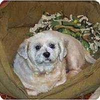 Adopt A Pet :: Taylor - Dayton, OH