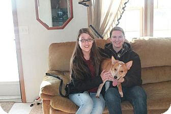 Collie Mix Dog for adoption in Northville, Michigan - Jack-ADOPTED