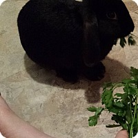 Adopt A Pet :: Blake - Maple Shade, NJ