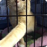 Adopt A Pet :: Carmelita - Byron Center, MI