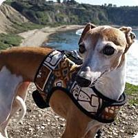 Adopt A Pet :: Dusty - Costa Mesa, CA