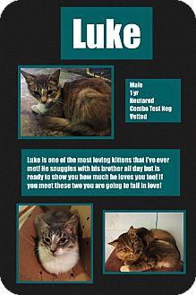 Domestic Longhair Kitten for adoption in CLEVELAND, Ohio - Luke