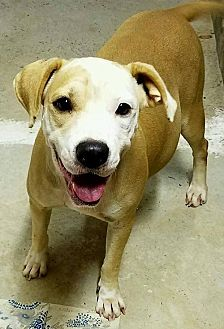 American Bulldog Mix Dog for adoption in Tuskegee, Alabama - Maggie