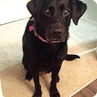 Adopt A Pet :: Marley - Pottstown, PA