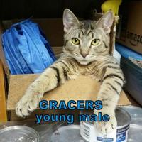 Adopt A Pet :: Gracers - Erie, PA