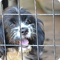 Adopt A Pet :: Tommy - Pikeville, MD