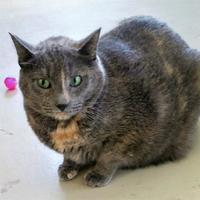 Adopt A Pet :: Stacey - New Iberia, LA