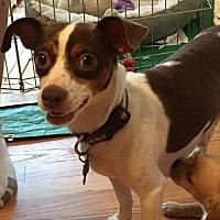 Adopt A Pet :: Kerri - Houston, TX