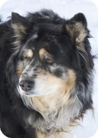 Anatolian Shepherd Mix Dog for adoption in West Des Moines, Iowa - Dixie
