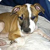 Adopt A Pet :: Thelma - Phoenix, AZ