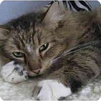 Adopt A Pet :: Richard - Portland, OR