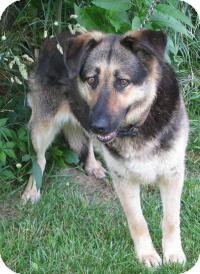 German Shepherd Dog Mix Dog for adoption in Mineral, Virginia - Grace
