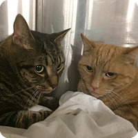 Adopt A Pet :: Romeo and katy - Pittstown, NJ