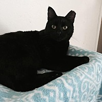 Adopt A Pet :: Sabrina - San Jose, CA