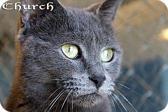 Domestic Shorthair Cat for adoption in Texarkana, Arkansas - Church