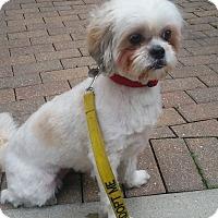 Adopt A Pet :: Leona - Chicago, IL