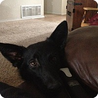 Adopt A Pet :: Bradie (Guest) - Roswell, GA