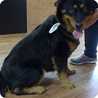 Adopt A Pet :: Cocoa - Manning, SC