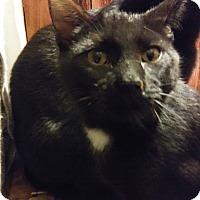 Adopt A Pet :: Zeus - Farmington, AR
