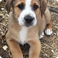 Adopt A Pet :: Lucas - Providence, RI