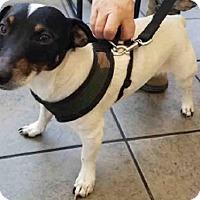 Adopt A Pet :: DUKE - San Antonio, TX