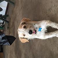 Adopt A Pet :: Monty - Orange, CA