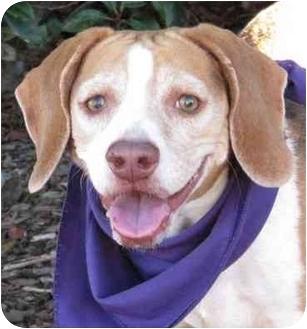 Beagle Mix Dog for adoption in San Diego, California - Freida