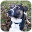 Photo 1 - Foxhound/Boxer Mix Dog for adoption in Mocksville, North Carolina - Baron