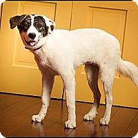 Adopt A Pet :: Alice - Owensboro, KY