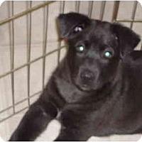 Adopt A Pet :: Dash - Washington, NC