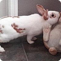 Adopt A Pet :: Dennis Hopper - Williston, FL