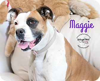 Boxer Mix Dog for adoption in Canyon Country, California - Maggie