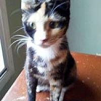 Adopt A Pet :: Soraya - Marion, NC