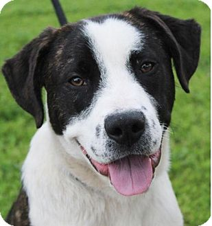 Mixed Breed (Large) Mix Dog for adoption in Red Bluff, California - BUSTER