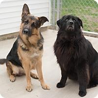 Adopt A Pet :: Izzy & Bear - Westfield, NY