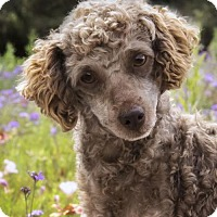 Adopt A Pet :: Carson - El Cajon, CA