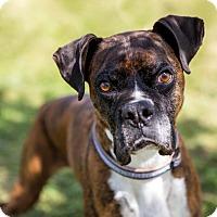 Adopt A Pet :: Jaime - Denver, CO