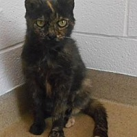 Adopt A Pet :: Bella - Wooster, OH