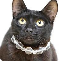 Adopt A Pet :: Letty - Dublin, CA