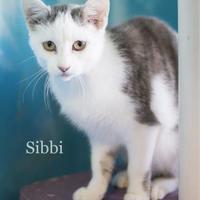 Adopt A Pet :: Sibbi - West Des Moines, IA