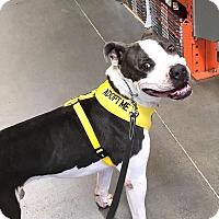 Adopt A Pet :: Atlas ~ Courtesy Post - Phoenix, AZ
