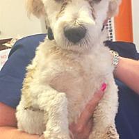 Adopt A Pet :: Larry - Boca Raton, FL