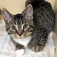 Adopt A Pet :: Oscar  $20 - Lincolnton, NC