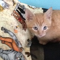 Adopt A Pet :: Patterson - Winston-Salem, NC