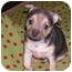 Photo 2 - Chihuahua Mix Puppy for adoption in San Diego, California - Coco