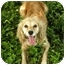 Photo 2 - Cocker Spaniel Dog for adoption in Windham, New Hampshire - Anna