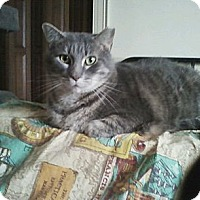 Adopt A Pet :: Larry - Warminster, PA